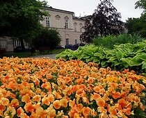 An orange-green flower composition planted on Litewski Square in Lublin.