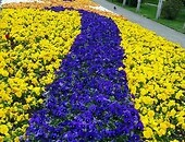 A yellow-orange-blue flower composition planted on Litewski Square in Lublin.